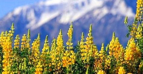 Científicos chilenos analizaron el aporte sensorial de las raíces en el desarrollo de las plantas