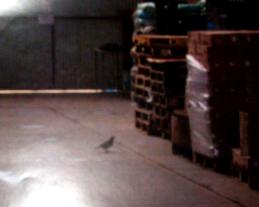 Los fiscalizadores constataron la presencia de palomas en el lugar donde se almacenaban los alimentos.