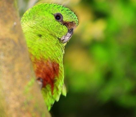 Chile tiene una de las menores diversidades específicas de fauna y flora silvestres en comparación con el resto de los países sudamericanos. Pero el país sí posee, por sus características de aislamiento terrestre muy parecidos a los de una isla, una condición de muy alto endemismo.