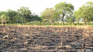 La situación de miles de productores agrícolas paraguayos es desesperada.