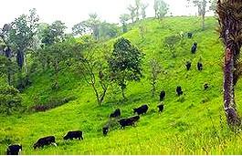 La desforestación para abrir camino a la ganadería es una de las principales causas de pérdida de biodiversidad, según el informe.
