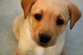 Pacto Animal prepara magno evento a beneficio para sus amigos caninos