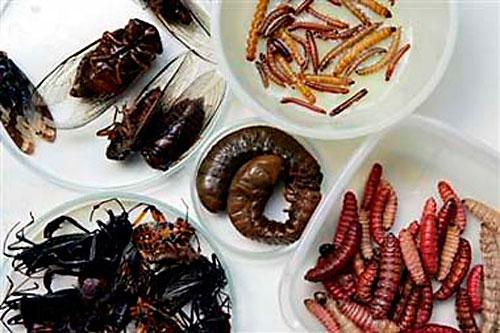 Insectos a la carta: la FAO destaca que son altamente nutritivos y ricos en proteínas