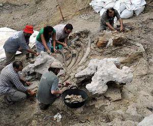 Piezas fósiles de dos dinosaurios peleando se subastará en Nueva York