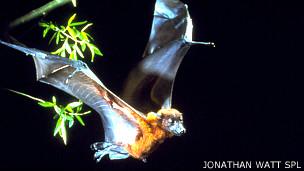 ISP descarta plaga de murciélagos