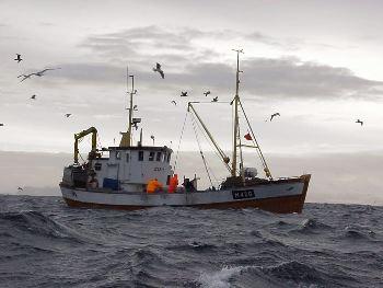 Empresa multada por malas prácticas recibe asignación de cuotas por parte de la subsecretaria de Pesca