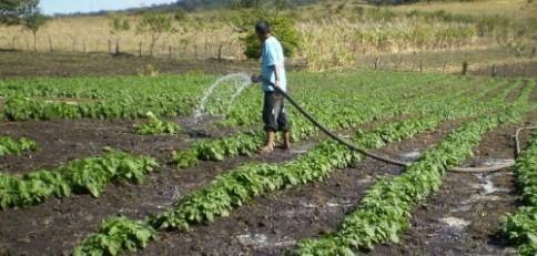 Piñera decretará emergencia agrícola en algunas comunas de la RM