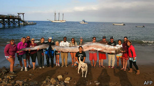 El hallazgo de la serpiente marina la semana pasada causó sensación en internet.