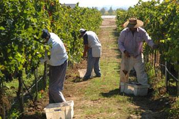 Denuncian rapto y explotación de trabajadores temporeros por parte de empresa exportadora de frutas