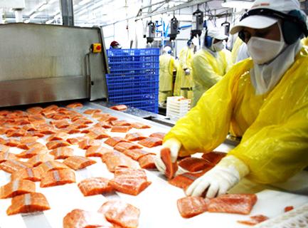 La FAO detecta malas prácticas laborales de las salmoneras chilenas y aboga por legislación acorde a la realidad mundial