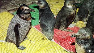 Nada como un sweater para evitar que los pingüinos pasen frío y se laman el crudo tóxico.