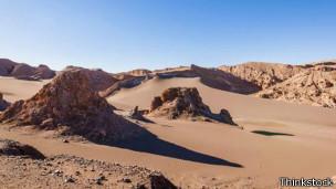Incluso en el desierto la vida surge y se adapta.