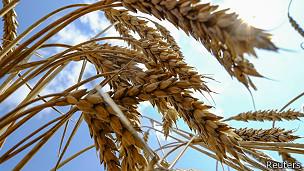 Ucrania es el tercer exportador de trigo y maíz del mundo.