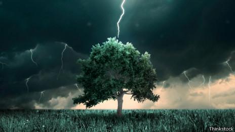 Los expertos recomiendan no protegerse bajo un árbol en una tormenta.