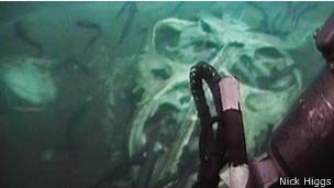 Las criaturas muertas fueron filmadas por robots submarinos que exploraban el lecho marino.