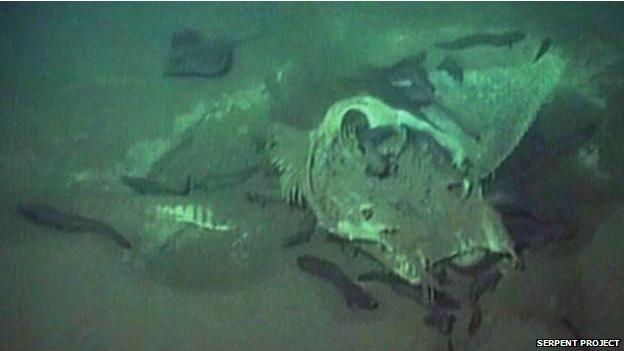 Tres criaturas que posiblemente eran manta rayas fueron filmadas por los ROV.
