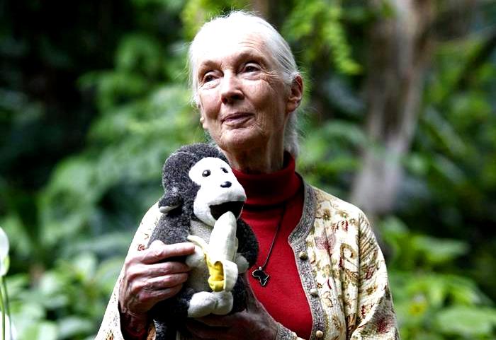 Jane Goodall: