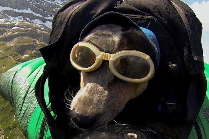 Whisper, el primer perro en practicar salto base