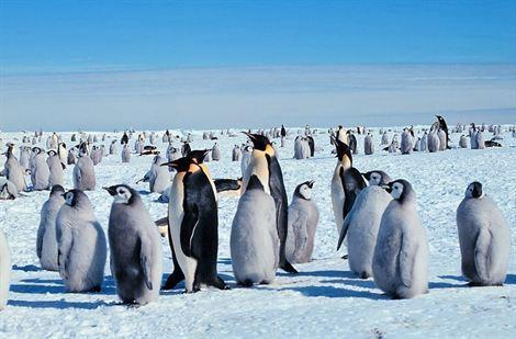 Encuentran virus de gripe aviar en pingüinos de la Antártica