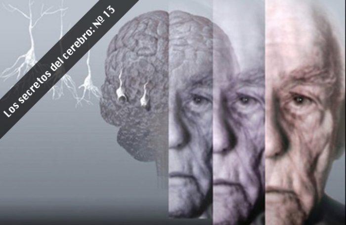 Científicos descubren proteína responsable de la protección de enfermedades neurodegenerativas en adultos mayores
