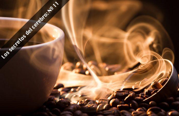 Neurocientíficos descubren que la cafeína además de producir mejoras cognitivas incrementa la memoria a largo plazo