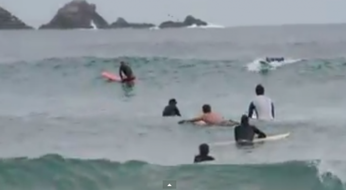 Video: Delfines sorprenden a surfistas