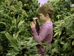 Investigan el uso de la marihuana medicinal en niños con epilepsia severa