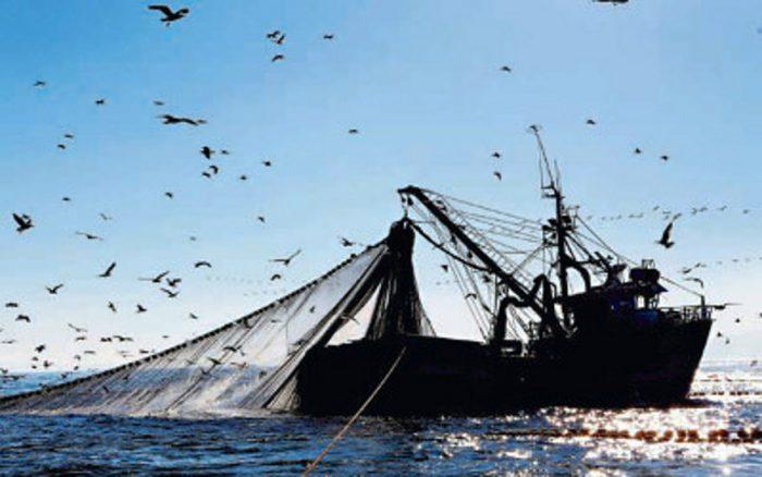 La sustentabilidad de las especies pesqueras, lo realmente importante