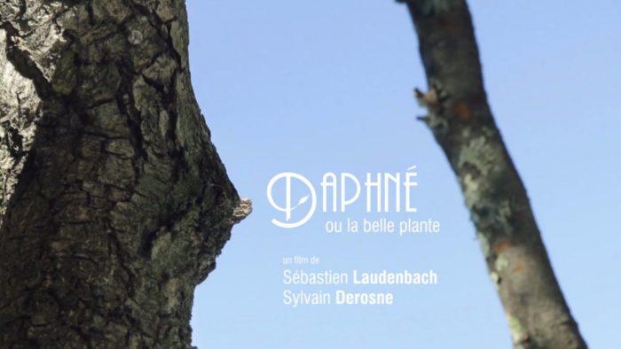 Daphné ou la belle plante de Sylvain Derosne