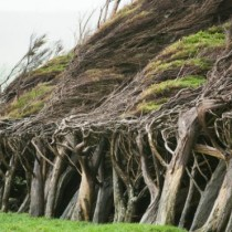 ¿Dónde está el lugar más ventoso de la Tierra?