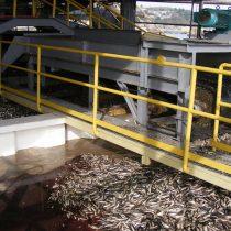 La cría de peces en agua dulce es más asequible y sostenible que en el océano