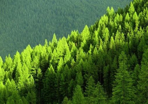 Certificación y desarrollo forestal