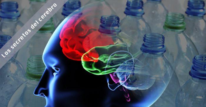 Neurociencia: Envases plásticos incidirían en fallas de la memoria de trabajo