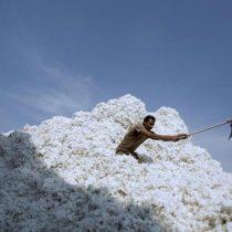 Hay algodón suficiente para 127.000 millones de camisetas