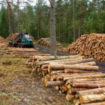 Equitas llueve de demandas a los factorings en estrategia para salvarse del caso de Innovaciones Forestales