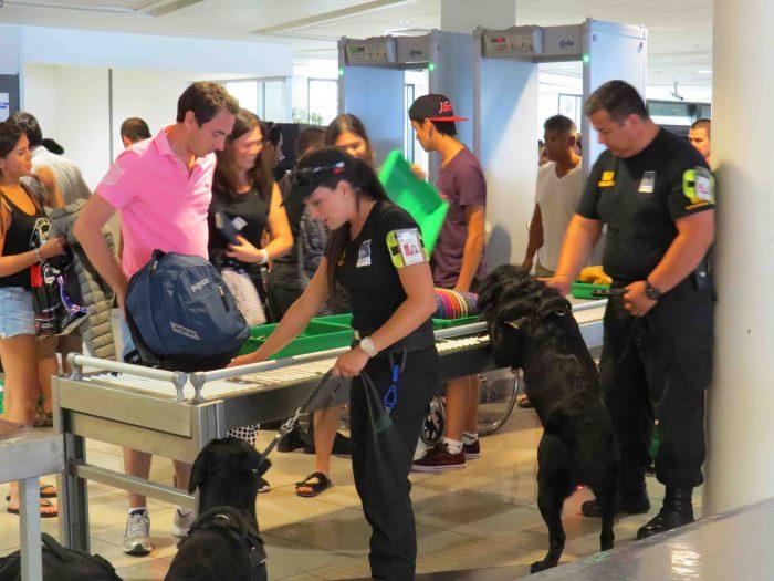 Los canes recorren varios kilómetros durante el día y la noche, buscando la presencia de explosivos en el equipaje.