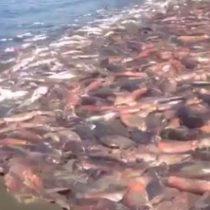 Ley de la jibia: un regalo de Chile para las flotas pesqueras de alta mar