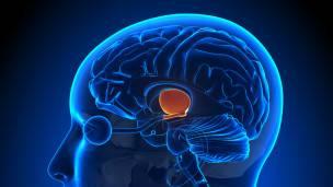 La alerta se produce en el hipotálamo, la parte del cerebro que regula las respuestas del subconsciente.