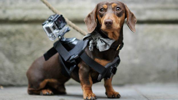 La marca de cámaras también lanzó accesorios para mascotas.