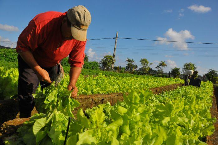 El agricultor será fundamental para el futuro alimentario de la humanidad