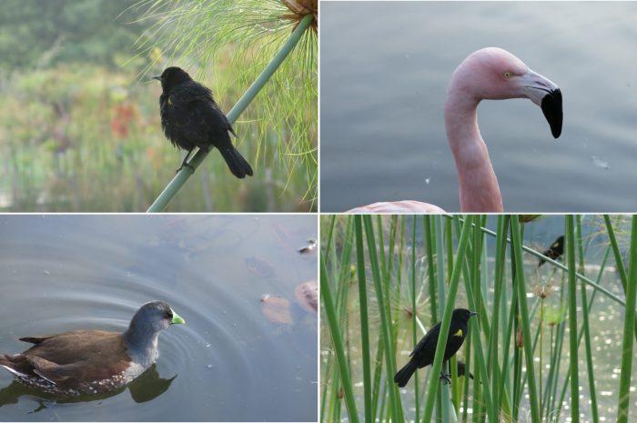 aves-parque-bicentenario