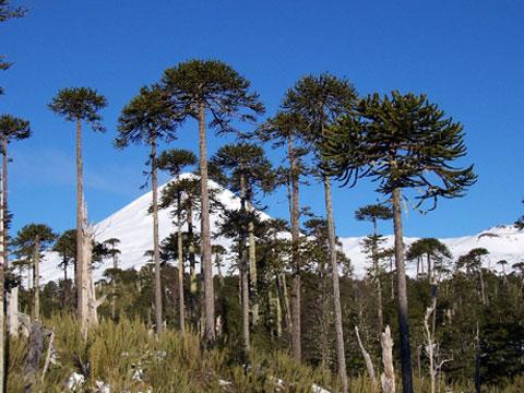 La Hora del Planeta de Latinoamérica insta a elegir entre especies o ecosistemas
