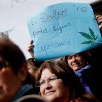 Primer fármaco chileno en base a cannabis sativa se registraría en 2017