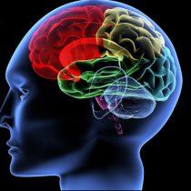 Las redes neuronales de la