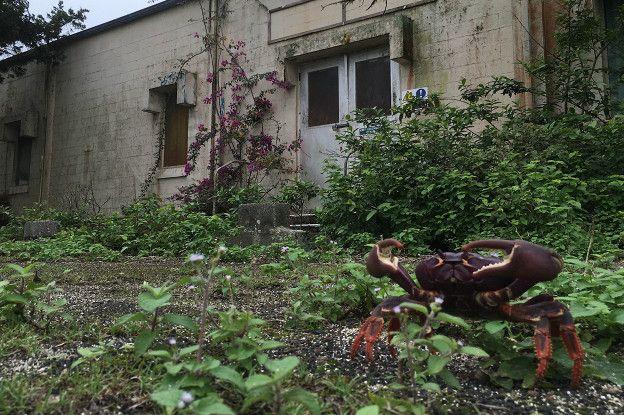 Cangrejo de tierra que parece estar reclamando posesión de una estación de Nasa abandonada.
