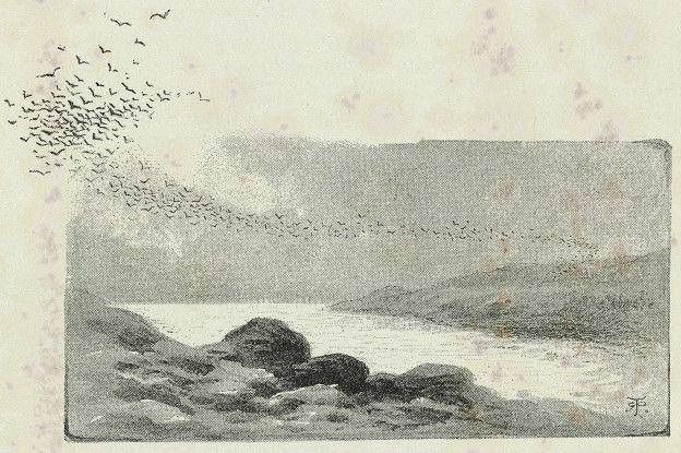 Bandada de golondrinas de mar sobre Isla Ascensión. Ilustración del diario de investigaciones de Charles Darwin. Primera edición ilustrada 1890.