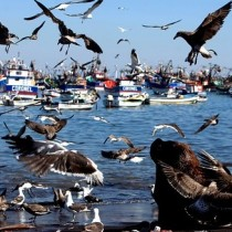 Bachelet decreta zona de catástrofe en la región de Los Lagos por Marea Roja