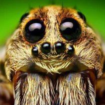 Por qué les tememos más a las arañas que al cambio climático