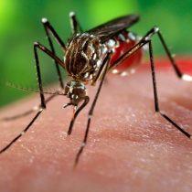 Minsal confirma hallazgo en Arica de un mosquito que transmite el virus Zika