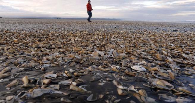 Fiscalía investigará vertimiento de 40 toneladas de salmones muertos al mar
